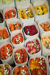 South America, Ecuador, Lasso, bouquets of roses in bundles in packaging warehouse of rose farm which grows and packages roses for export