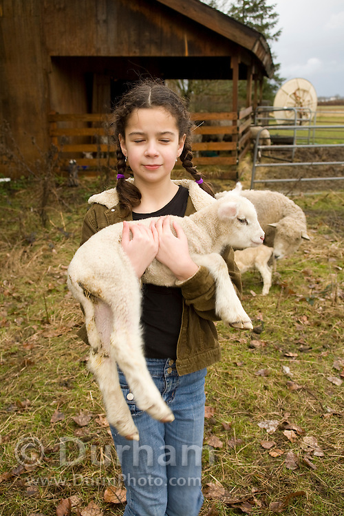 10 year old Isabel carries a newborn lamb back to the barn on a small family farm, Sauvie Island, Oregon. Model and Property released.