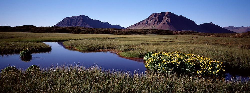Lítil tjörn með blómum og Kolbeinsstaðafjall í baksýn / Small pond with flowers and the mountain Kolbeinsstadarfjall in distance