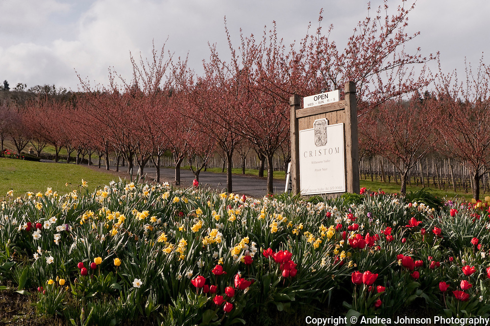 Cristom Winery, Eola Hills, Willamette Valley, Oregon