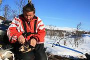 reindeer herder, Saanti Sijte, Mid-Norway mountains, eating dryed reindeer meat.