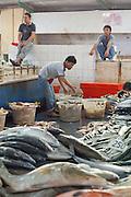 Men working in the fish market in Sandakan, Sabah, Borneo