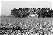 Nederland, Nagele, 15-9-1985Typische bouw van boerderij en schuur in de Noordoostpolder. Huizen en gebouwen voor de boeren werden in de pioniersperiode met eenzelfde architectuur gebouwd.Foto: Flip Franssen/Hollandse Hoogte