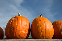 beautiful pumpkins against a blue sky