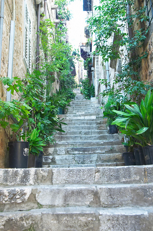 View from the Prijeko street up a narrow street with steep stairs. Narrow cobble stone street. Lots of green plants in pots lining the street up the hill. Dubrovnik, old city. Dalmatian Coast, Croatia, Europe.