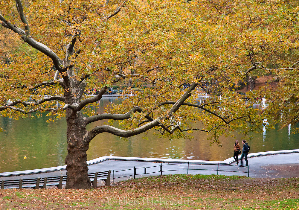 Autumn foliage at the Model Boat Pond in Central Park, New York City