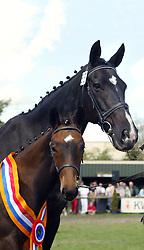 053-Ziziphus<br /> KWPN Paardendagen Ermelo 2004<br /> Photo © Hippo Foto