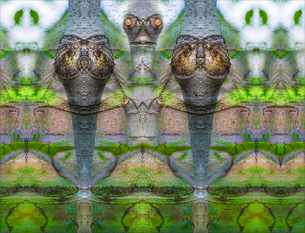 """""""Meerkats"""", derivative image from a photo of tree bark, spring, Ashland, OR, US"""