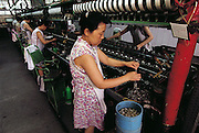 Tao Xiuzeng, a worker at the Silk Factory #1 in the city of Suzhou, describes her favorite recipe for silkworms as she pulls the silkworm cocoons from boiling water, threads the fine  silk filament onto a reel, and then tosses away the rest of the pupae when the 1000 yards or more of silk is wound off each one. Occasionally she brings silk worm pupae home to eat, first drying them in the oven, then stir-frying them with ginger, onion, rice wine, and garlic, Suzhou, China. Her daughter is afraid of them, she says. (Man Eating Bugs page 90 Bottom)