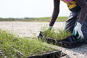 Marsh restoration and grass planting by non profit group Save the Bay in Rhode Island.  Save the Bay is an environmental group that has cleaned the water in Narragansett bay and restored coastal habitats with strong educational outreach since the 70s