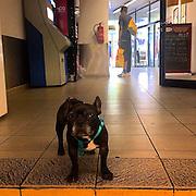 Security. Tesco Express_Zizkov. #prag #praha #prague #czechrepublic #dog #tesco #shop #yellow #shopping