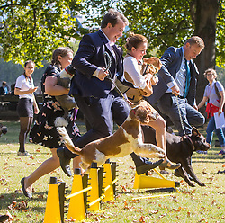 MPs and members of the House of Lords bring their pooches to Parliament as they compete to be crowned The Dogs' Trust and The Kennel Club's Westminster Dog Of The Year. PICTURED: MPs and their dogs jump an obstacle on the agility course.