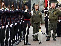 """Sir Nils (with his keepers Lynda Burrill & Stuart McGeachie) reviews His Majesty the King of Norway's Guard as they paid a very special visit to RZSS Edinburgh Zoo to bestow a unique honour upon king penguin Sir Nils Olav. Already a knight, the most famous king penguin in the world was given the new title of """"Brigadier Sir Nils Olav"""".(c) Brian Anderson 