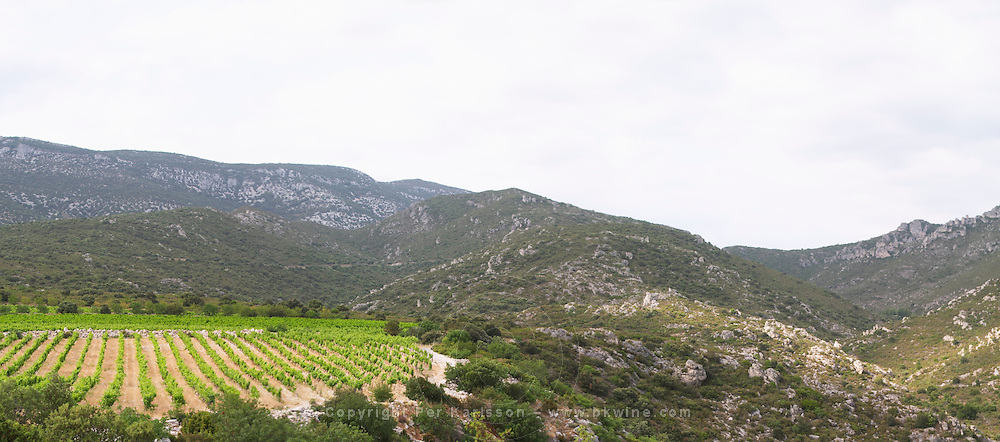 Domaine des Grecaux in St Jean de Fos. Montpeyroux. Languedoc. Garrigue undergrowth vegetation with bushes and herbs. France. Europe. Vineyard.