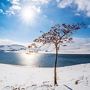 I have taken this picture in a beautiful day of winter around Mahabad dam or lake in Kurdistan