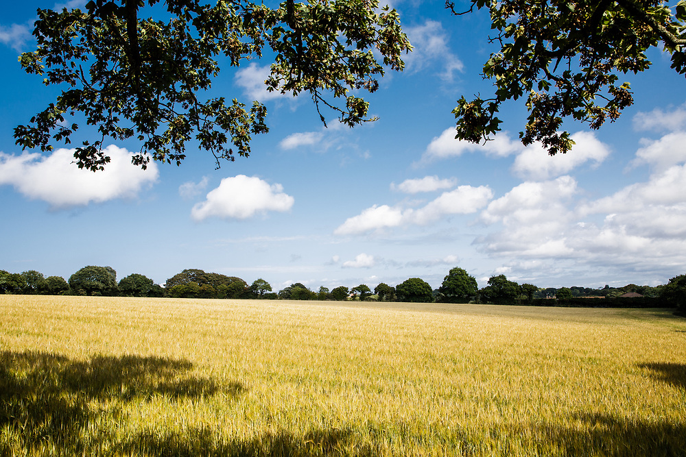 Agricultural farmland and fields in the countryside of Jersey, CI