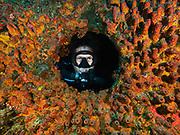 USS Spiegel Grove shipwreck, Key Largo, FL