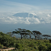 Mount Kilimanjaro rises in the distance in Tanzania. Amboseli National Park, Kenya.
