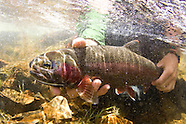 Sierra Nevada Fly Fishing Photos - Stock images