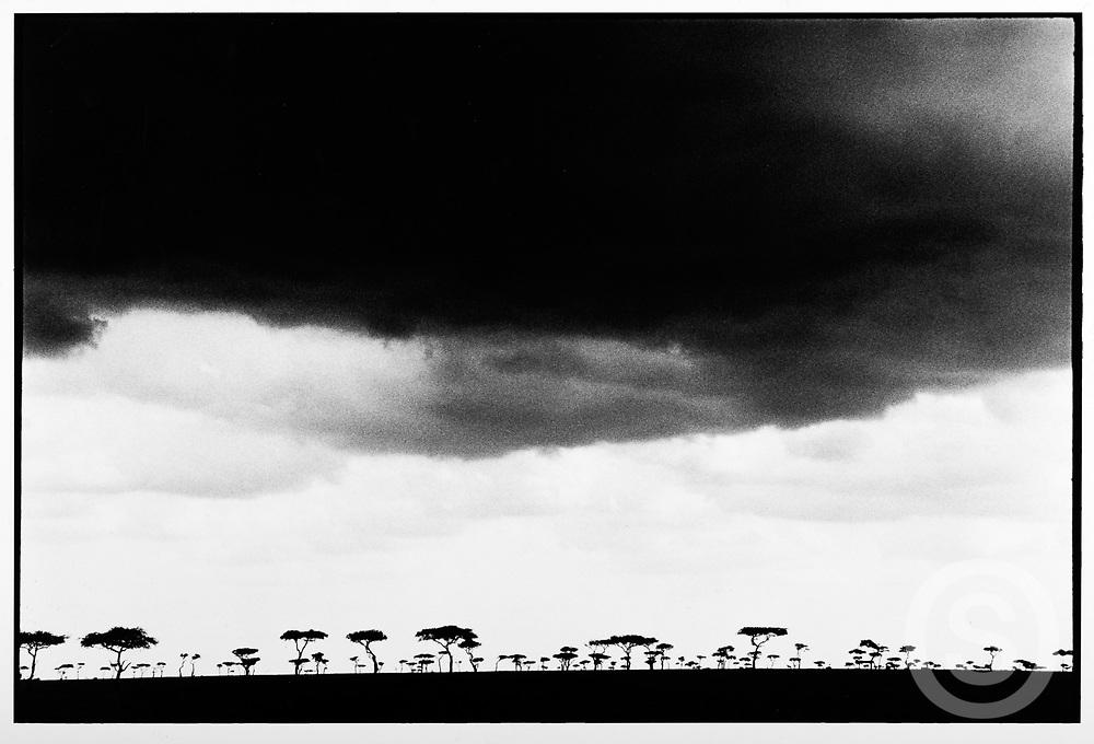 Photographer: Chris Hill, Maasai Mara, Kenya