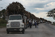Trucks loaded with sugar cane cue outside the Belize Sugar Industries Factory, facility that processes all of the BSCFA's sugar cane. Belize Sugar Cane Farmers Association (BSCFA). Belize Sugar Industries Factory, Orange Walk, Belize. January 22, 2013.