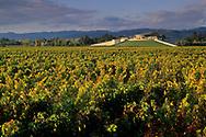 Sunset light on Opus One Winery, Oakville, Napa County, California