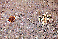 A squashed cheese burger and some French fries on the ground. WATERMARKS WILL NOT APPEAR ON PRINTS OR LICENSED IMAGES.