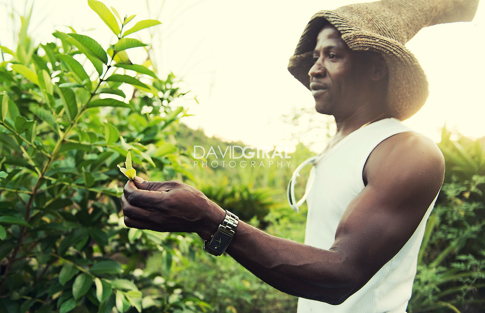 Editorial Travel Photography: Man showing some medicinal plants at Slave's Savannah, Trois Ilets, Martinique Island, Caribbean Sea, Lesser Antilles, France