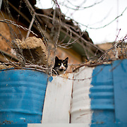 A cat sits on barrels that block entry into a street which now resides in the United Nations Buffer Zone on central Nicosia March 12, 2014. This year marks 40 years since the Cyprus National Guard staged a coup in Cyprus and the subsequent Turkish military intervention, which escalated a civil war between the Greek and Turkish Cypriot communities on the island. After the ceasefire a heavily restricted UN controlled Buffer Zone between the north and south of the island was put into operation. It stretches 180 Km across the whole island measuring 7.4 km at its widest and 3.3 meters at its narrowest point. It is restricted to the general public and no Greek or Turkish Cypriots are allowed inside. REUTERS/Neil Hall (BRITAIN)