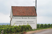 Vineyard. Chateau Andre Ziltener, Chambolle Musigny. Burgundy, France