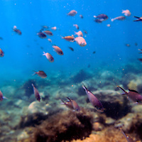 Americas, Caribbean, St. Lucia. Snorkelling in St. Lucia's Pigeon Island.