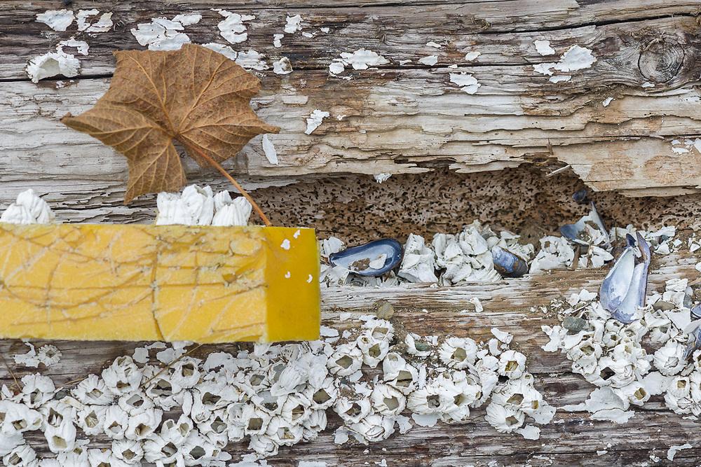 Abstract marine log boom design, August, Port McNeil, British Columbia, Canada