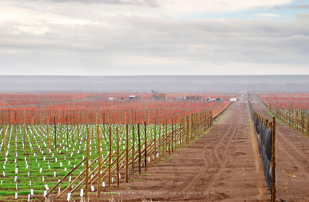View over the vineyard black wind breaker windbreaker net to protect from the fierce winds Bodega Del Fin Del Mundo - The End of the World - Neuquen, Patagonia, Argentina, South America