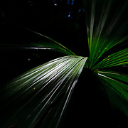 Kuranda Tour in Cairns surroundings. Kuranda is a village in the rainforest. Fan Palms. The Barron Falls.