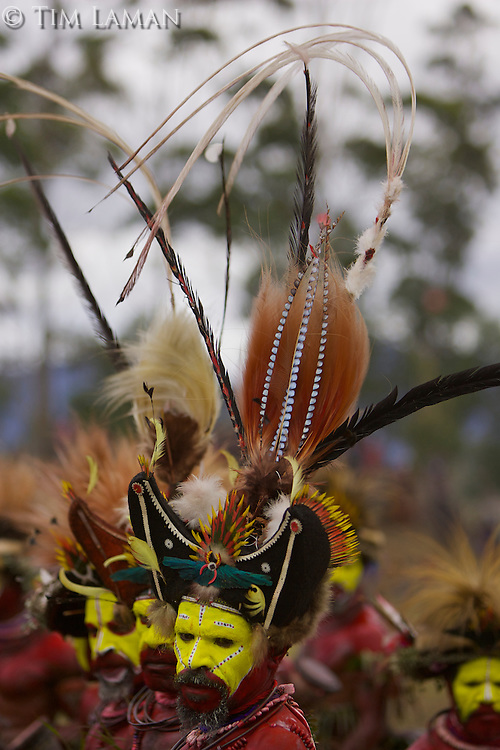 Huli Wigmen from the Tari area, Southern Highlands Province..Mount Hagen, Western Highlands Province, Papua New Guinea.