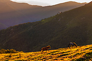 Couple lively horses in the mountain