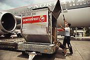 US department of agriculture Jonathan Saito with beagle, Joice, checking a Northwest Airlines flight from Guam for brown tree snakes. Honolulu, Oahu, Hawaii. USA.