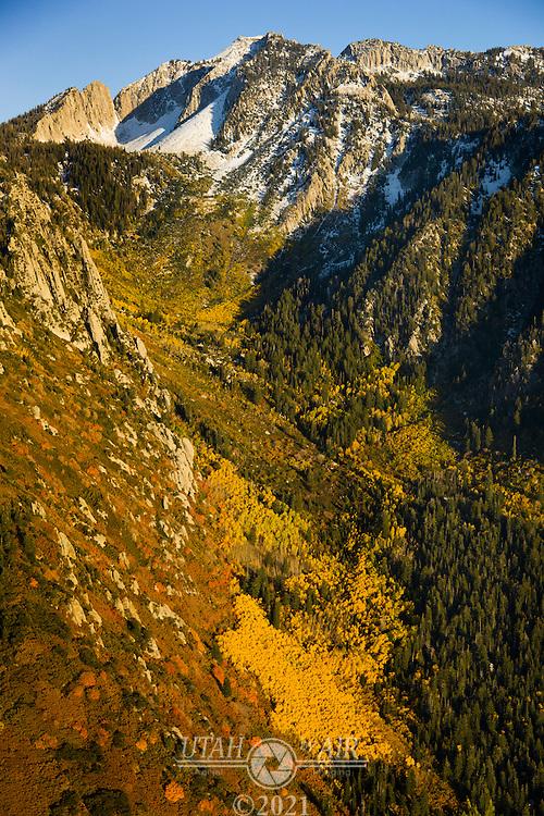 Fall Colors near Big & Little Cottonwood Canyons