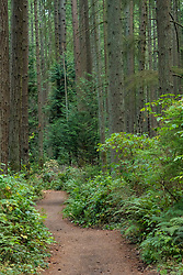 United States, Washington, Kirkland, hiking trail in Bridle Trails State Park