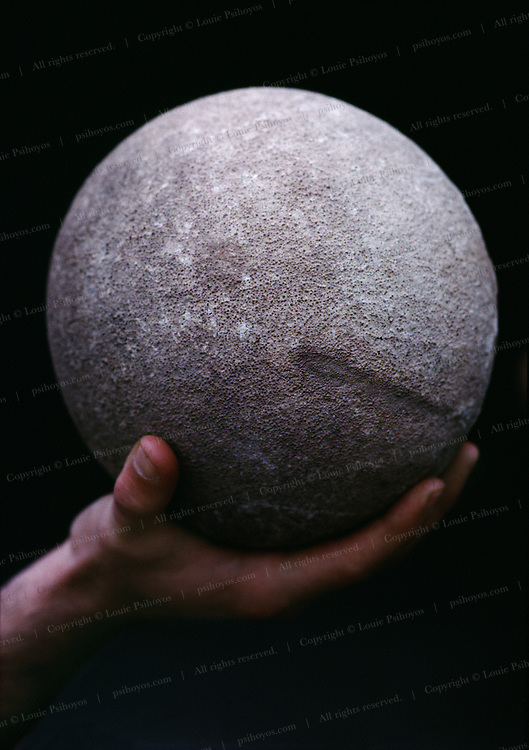 Dinosaur Eggs Discovered by Family in Lamarque, Argentiana