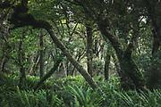 Forests on the sides of The Southern Circuit, Stewart Island / Rakiura, New Zealand Ⓒ Davis Ulands | davisulands.com