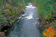 Fall color along the Rogue River, Rogue River National Forest, Oregon