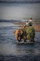 Elephant carts huge bundles of grass out of Chitwan National Park, Nepal.