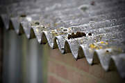 Nederland, Malden, 15-3-2018 Op het dak van een oude boerenschuur, liggen platen asbest als dakbedekking . Ze moeten er door een gespecialiseerd sloop bedrijf vanaf worden gehaald. Het grote aantel daken van met name boerderijen en schuren vormt op de lange termijn een gezondheidsrisico en moeten allemaal verwijderd worden . Foto: Flip Franssen