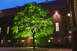 Tree in front of townhouse at dusk, Stockholm, Sweden