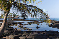 The City of Refuge as locals call it, or more correctly Honaunau Bay, is a favorite snorkeling spot on the Big Island. <br /> Here snorkeling is calm and has exceptional visibilty most of the time. Honaunau Bay is next door to  Puuhonua O Honaunau National Historic Park.  The site was home to powerful Hawaiian chiefs.  It is considered a sacred site, so snorkeling and snorkeling in Keoneele Cove is not permitted.