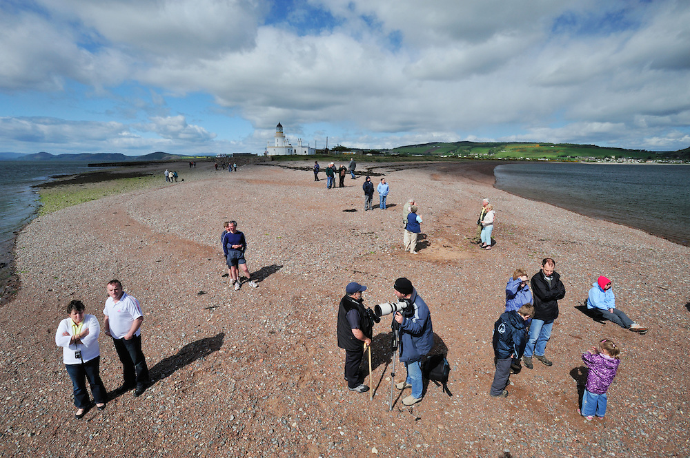 Visitors and local people gathered to watch Bottle-nosed Dolphins at Chanonry Point,<br /> Tursiops truncatus,<br /> Moray Firth, Nr Inverness, Scotland - May