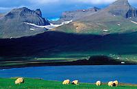 Islande - fjord de Borgarfjördur