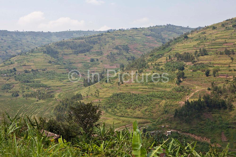 The farmland and terraces in Southwest region of Uganda.