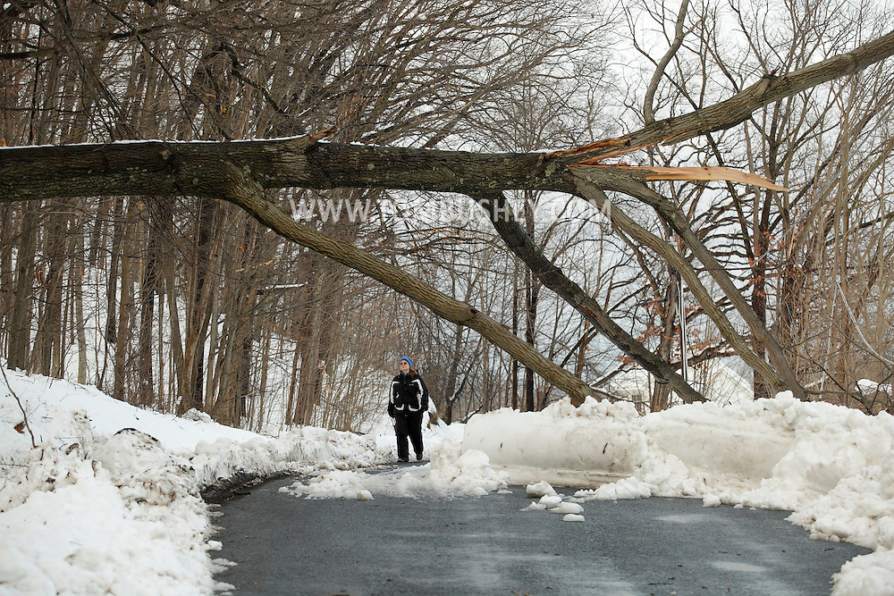 Washingtonville, New York - A woman looks up at a fallen tree that took down power lines on Hulsetown Road after snowstorm on  Feb. 27, 2010.